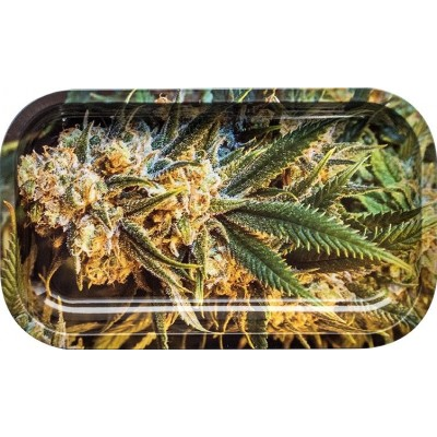 ROLLING TRAY PLANT